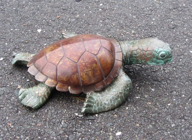 Lucas Salton turtle IMG_7230