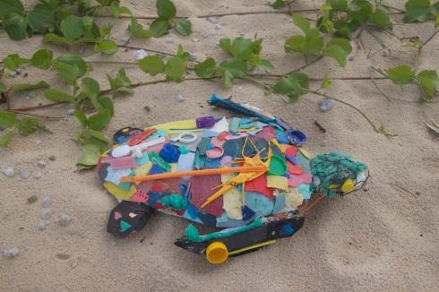 Rubbish Turtle IMG_6771