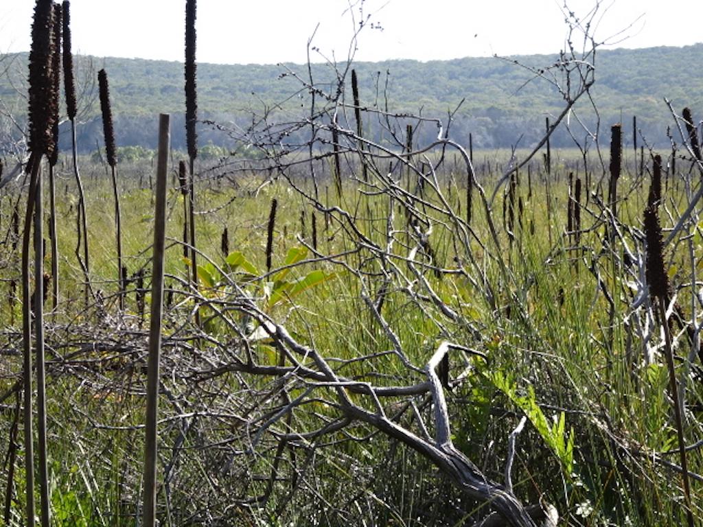 NNP Marcus Section wet heathland