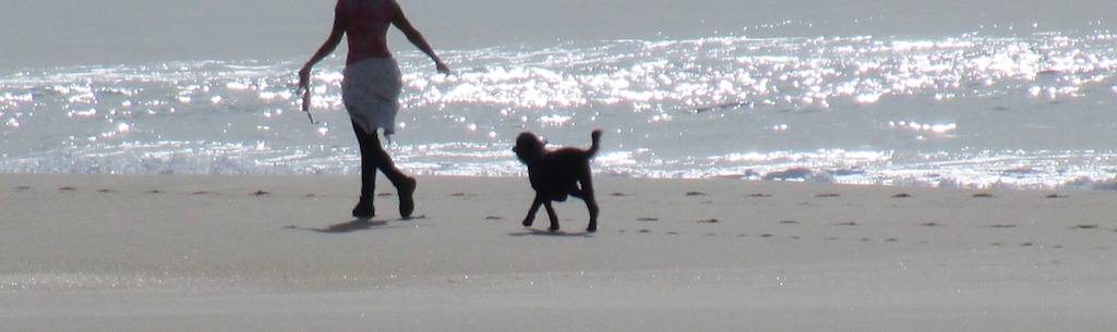 dog beach3