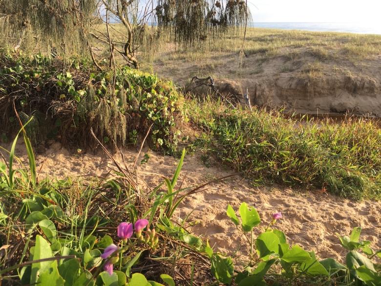Marcus Beach Path