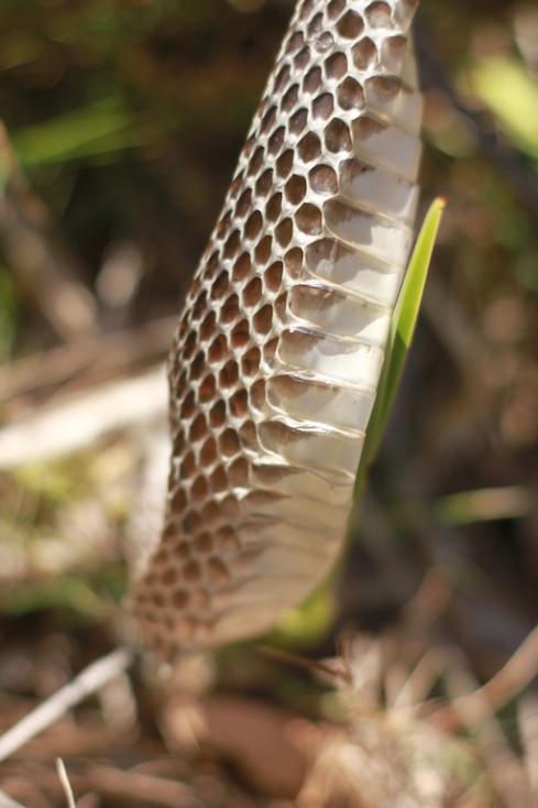 Snake skin 1.jpg