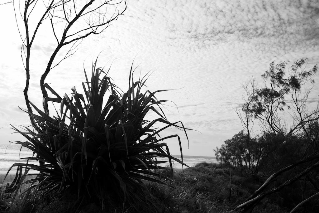 marcus beach day 5 #3 copy
